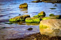 Vaggar fullvuxet med intensiva gröna alger på den kust- kusten arkivfoto