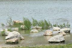 Vaggar i översvämmat villebråd Arkivbild