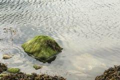 Vaggar i Norge Fotografering för Bildbyråer