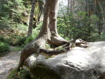 Vaggar i skog Arkivfoto