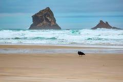 Vaggar i vattnet på Sandflyfjärden, den Otago halvön, den södra ön, Nya Zeeland royaltyfri fotografi