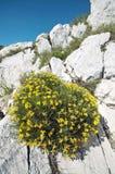 Vaggar och blommar lodlinje Arkivfoton
