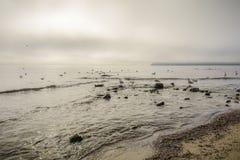Vaggar och flocken av fåglar i varmvattnet av Blacket Sea Arkivbild