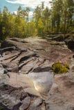 Vaggar och skogen på Ladoga sjön Fotografering för Bildbyråer