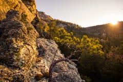 Vaggar och träd på solnedgången i Blacket Hills av South Dakota arkivbilder