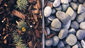 Vaggar och Wood chiper med små växter som igenom växer royaltyfri foto