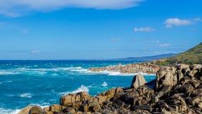 Vaggar på den australiska kusten i New South Wales, Australien royaltyfria bilder