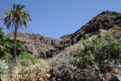 Vaggar på Granen Canaria Arkivfoto
