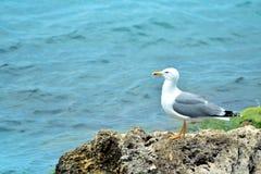 vaggar seagullen Royaltyfri Fotografi