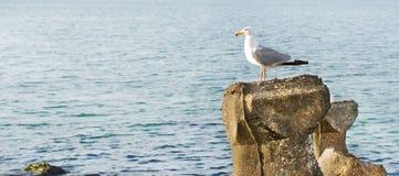vaggar seagullen royaltyfria foton