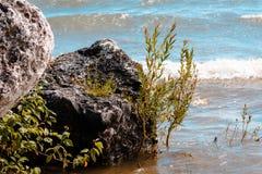 Vaggar tvätt över av Lake Michigan vågor Arkivbilder