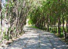 Vagharshapatyerevan Armenië Ejmiatsin tuin Stock Foto's