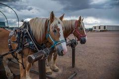 Vagn i Grand Canyon Arkivbild