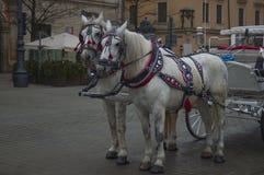Vagn i Krakow Arkivfoto