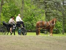 Vagn med den bruna hästen Royaltyfria Foton