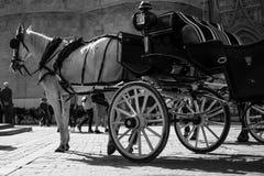 Vagn med den vita hästen i en fyrkant av Spanien royaltyfria foton