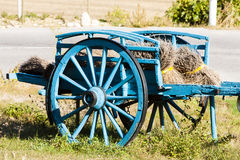 Vagn med lavendelar Arkivbild