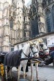 Vagn nära Stephansdom, Wien Fotografering för Bildbyråer
