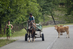 Vagn och kor på vägen i Georgia Fotografering för Bildbyråer