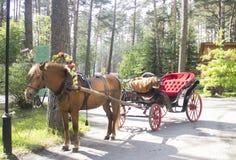 vagn tecknad häst arkivfoto