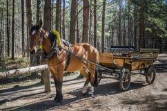 vagn tecknad häst Royaltyfri Fotografi