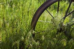 Vagnen rullar in gräs på ranchen arkivfoto