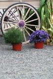 Vagnhjul och blomkrukor Arkivbilder