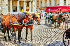 Vagnshästar som går i gatorna av en av de mest härliga europeiska städerna - Wien _ Arkivfoto