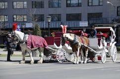 vagnsstadshästar New York Arkivbild