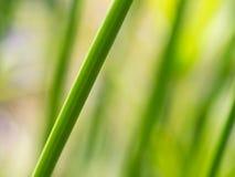 Vago di Reed Branch fotografie stock