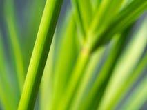 Vago di Reed Branch fotografia stock libera da diritti