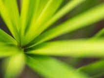 Vago di Reed Leaf immagine stock libera da diritti