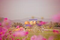 Vagone blu in pieno delle zucche in azienda agricola fotografia stock