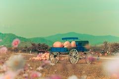 Vagone blu in pieno delle zucche in azienda agricola fotografie stock libere da diritti