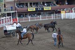 Vagone e cavalli, pista di corsa, Calgary Immagini Stock Libere da Diritti
