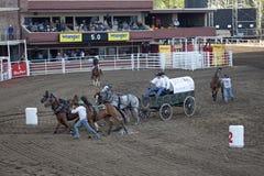 Vagone e cavalli, pista di corsa, Calgary Fotografie Stock Libere da Diritti