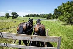 Vagone trainato da cavalli del fieno di Amish Fotografie Stock Libere da Diritti