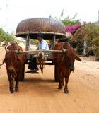 Vagone, trasporto alla campagna del Vietnam Fotografie Stock Libere da Diritti