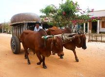 Vagone, trasporto alla campagna del Vietnam Fotografia Stock Libera da Diritti