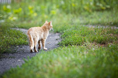 Vagrant cat. Dirty an animal in the street Stock Photography