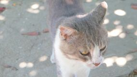 Vagrant cat. Dirty animal in the street stock video footage