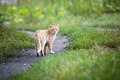 Vagrant cat. Dirty an animal in the street Royalty Free Stock Images
