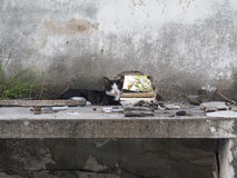 Vagrant cat is sitting on a deserted building Royalty Free Stock Photography