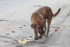 Vagrant Dog in Thailand. royalty free stock images
