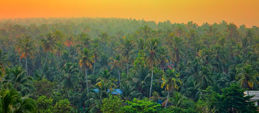 Vague beckoning palm groves of India. India of our dreams: vague beckoning palm groves and jungles with tigers, elephants and Mowgli. Tropical paint at sunrise Stock Photography
