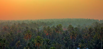 Vague beckoning palm groves of India. India of our dreams: vague beckoning palm groves and jungles with tigers, monkeys, elephants and Mowgli. Tropical paint at Stock Images