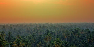 Vague beckoning palm groves of India. India of our dreams spirit of adventure: vague beckoning palm groves and jungles with tigers, monkeys, elephants and Mowgli Royalty Free Stock Images