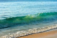 Vague claire en mer chaude en île tropicale des Barbade Photo stock