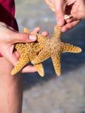 Vague déferlante avec des étoiles de mer et des coquilles Image stock