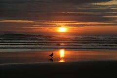Vague déferlante, coucher du soleil et une seule mouette Photographie stock libre de droits